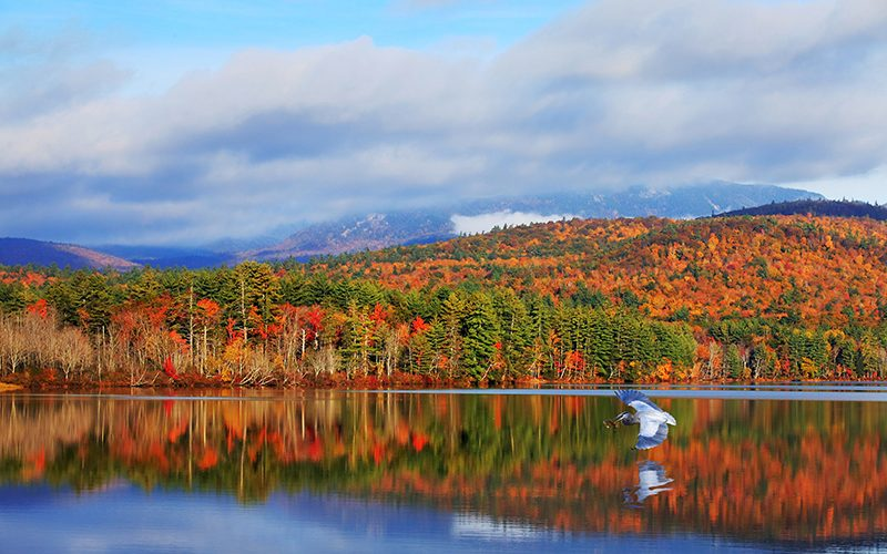 The Science Behind Fall Foliage
